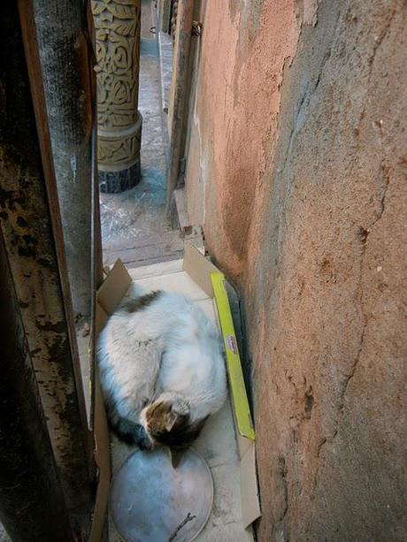 Cats/ Morocco Edition Part I