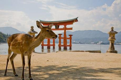 Japan honeymoons