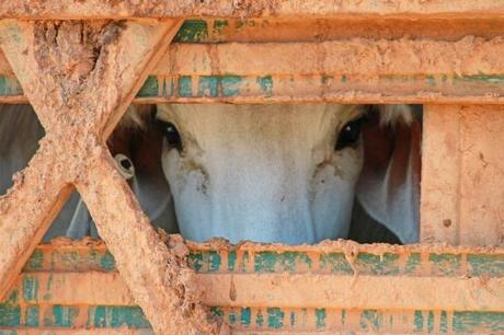Live exports suspended in Australia