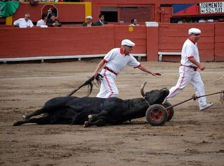 dead_bull