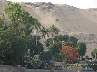 Palms [Arecaceae]