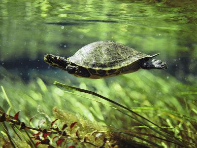 Turtle smugglers intercepted in Bangladesh