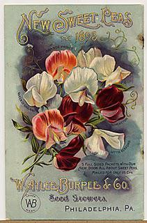 Vintage Seed Packet Images