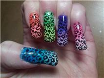 KOTD Leopard Gradient