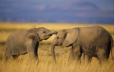 City Opera: With Real Elephants?