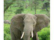 Biggest Land Animal Earth