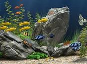 Hidden Objects Under Water