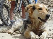 Roaming Rumi: Himalayan Dogumentary
