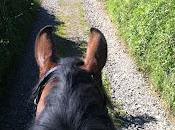 Amazing Weekend with Horses