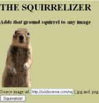 Going Nuts For Squirrels Online