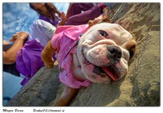Funny Bulldog: Image by Moyan_Brenn_BE_BACK_on_3th_SEPT, Flickr