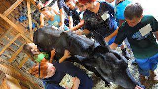 Indraloka's Animal Communication Workshop