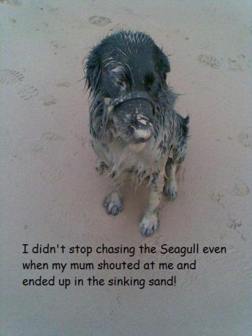 Shamed Dog, chased the seagull right into quicksand: image via dog-shaming.com/