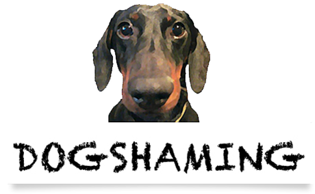 Dog-Shaming.com logo: © Dog-Shaming