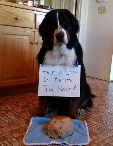 Shamed Dog, The moral of the story is...: image via dog-shaming.com
