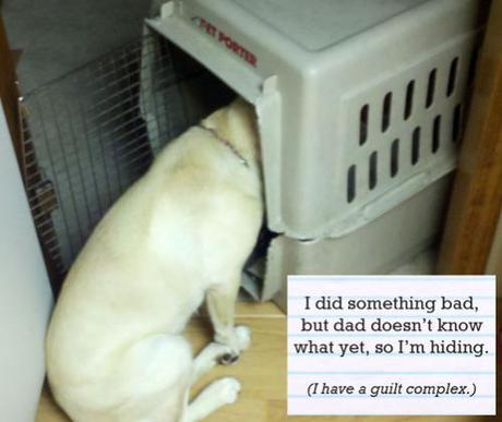 Dog Shaming Without Guilt: New, Fun Social Media For Frustrated Dog Owners
