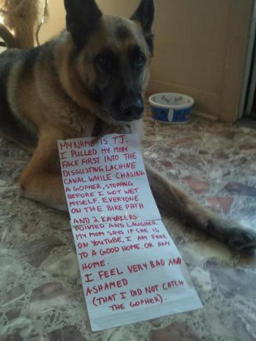 Shamed Dog, TJ, the gopher hunter: image via dog-shaming.com/