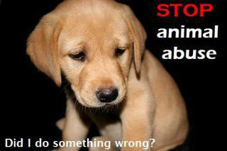 Stop Animal Abuse poster: image via glogster.com