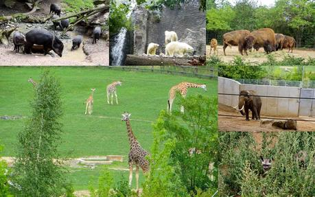 Forbes Traveler Worlds Best Zoos
