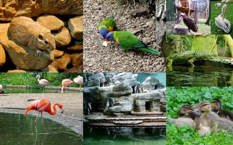 Forbes Traveler Best Zoos