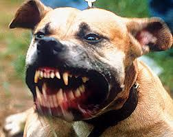 Legitimate Police Shooting of Dog Seven Times