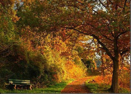 Cancer Rising - Monthly Astrological Forecast for October 2012