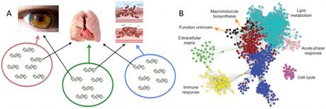 Epistasis in evolution