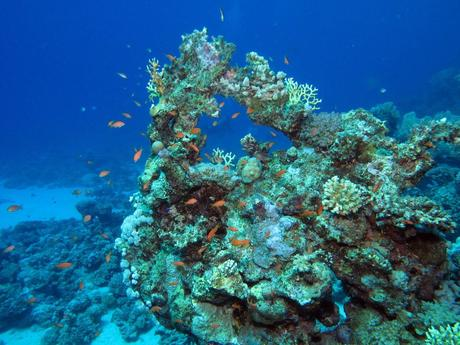 coral reefs in the caribbean