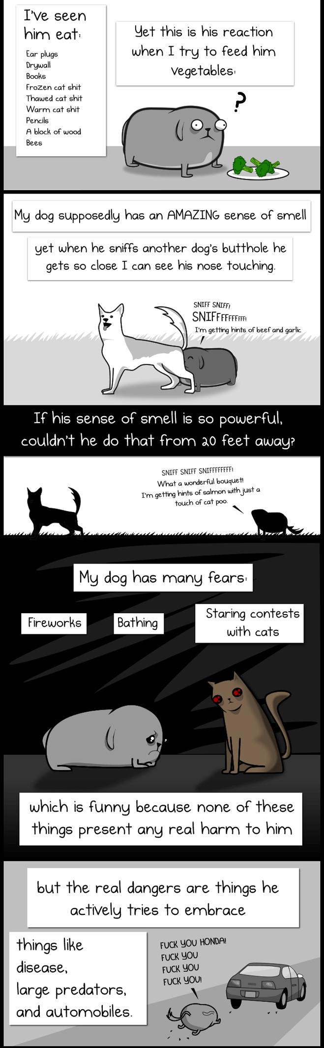 My Dog: The Paradox