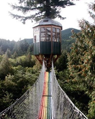cedar creek tree observatory 1 Eco Day ~ Tree House Hotel Designs HomeSpirations