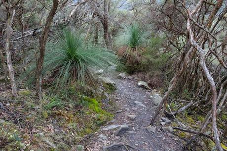 grass trees next to mount abrupt track