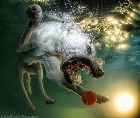 More Incredible Underwater Dogs by Seth Casteel!