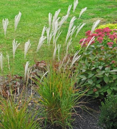 Yes more ornamental grass love paperblog for Different ornamental grasses