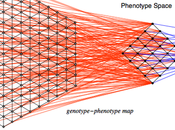 Genotype-phenotype Maps Mathy Biology