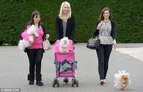 300 Dogs Breaks Britain's World Record!