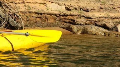 Croc seen while kayaking in Katherine Gorge, Northern Territory, Australia