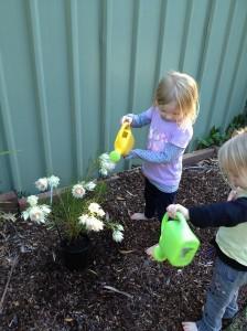 Girls watering the blushing bride plant