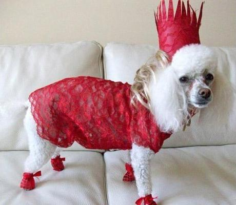 World's Strangest Halloween Costumes for Dogs!