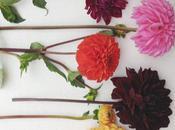 Flower Overload