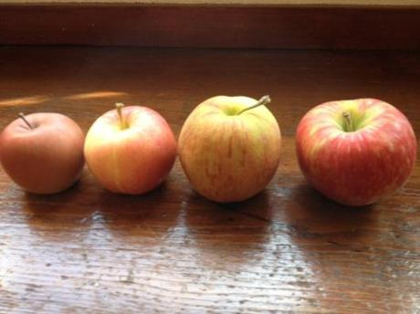 A is for ambrosia; B is braeburn; C is for crimson crisp