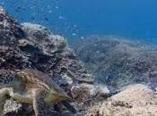 Only Mainland, Google Street View Recording Nature Beauty Underwater
