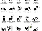 Learn Language Dogs