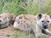 Human-Wildlife Conflict Africa
