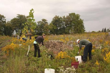Experience: Tree Planting with the David Suzuki Foundation