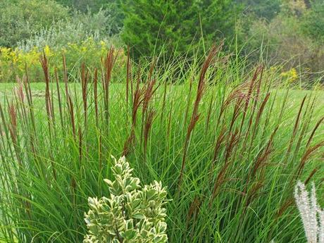 See ya ornamental grasses paperblog for Wild ornamental grasses
