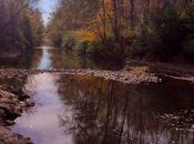 Sunday Funday: Reedy Creek