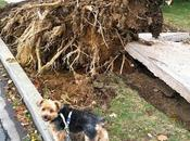 Priscilla Inspects Hurricane Sandy's Path Destruction