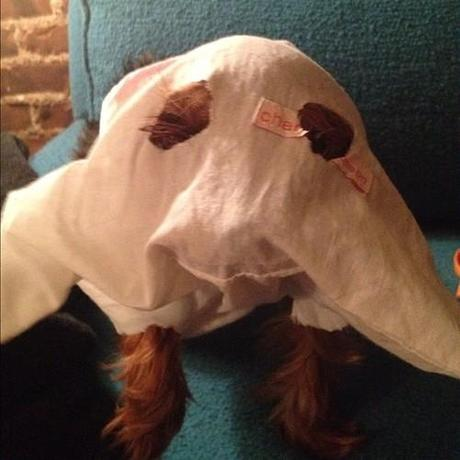 Franke Halloween costume #2=ghost (epic fail and unintentionally offensive.)