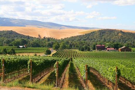 2012 Vintage – A Near Perfect Growing Season for Walla Walla Valley Winemakers