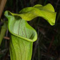 8 Plant Species in Danger of Disappearing.